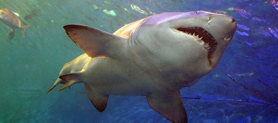 Shark Tank Teaches How To Close